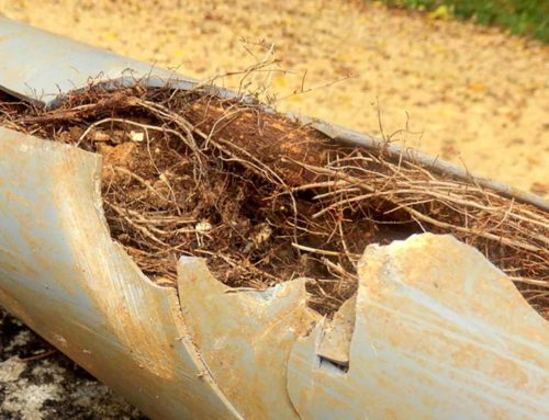 Why older homes suffer blocked drains from tree roots