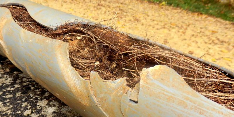 blocked drains from tree roots